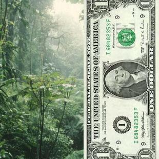 Chili : forêts indigènes et réserves d'eau